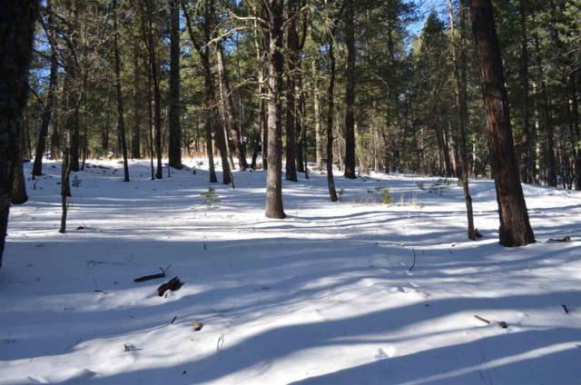 Lot 24 Silver Fox Trl #1, Mayhill, NM 88339 (MLS #159743) :: Assist-2-Sell Buyers and Sellers Preferred Realty