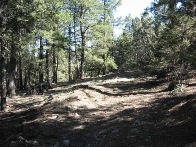 Address Not Published, Cloudcroft, NM 88317 (MLS #160673) :: Assist-2-Sell Buyers and Sellers Preferred Realty