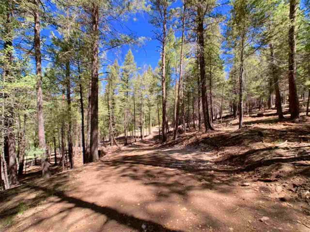 15 White Tail Pl, Mayhill, NM 88339 (MLS #160773) :: Assist-2-Sell Buyers and Sellers Preferred Realty