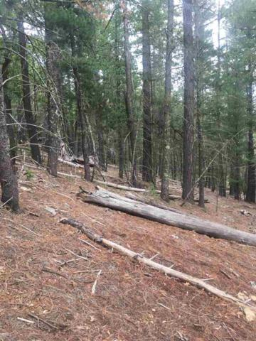 Dry Canyon Rd, Cloudcroft, NM 88317 (MLS #160987) :: Assist-2-Sell Buyers and Sellers Preferred Realty