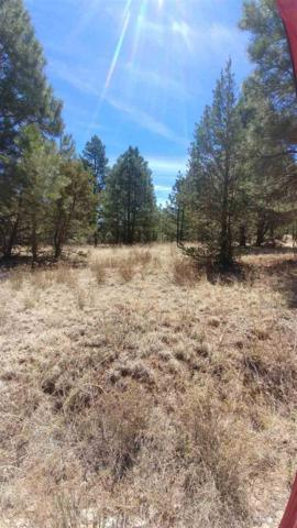 Rocky Trail Rd #5, Timberon, NM 88350 (MLS #161133) :: Assist-2-Sell Buyers and Sellers Preferred Realty