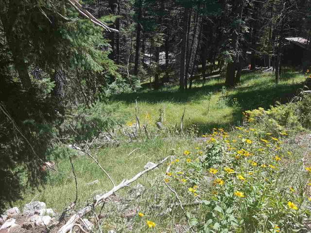 27 Address Not Published, Cloudcroft, NM 88317 (MLS #161270) :: Assist-2-Sell Buyers and Sellers Preferred Realty