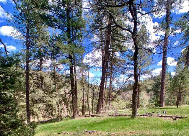 20 Billie Jean Way, Cloudcroft, NM 88317 (MLS #162633) :: Assist-2-Sell Buyers and Sellers Preferred Realty
