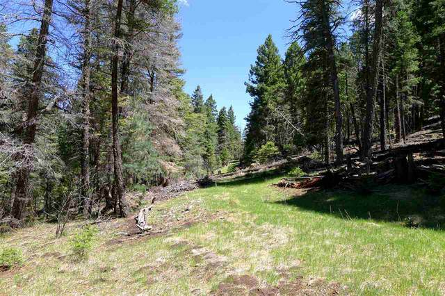 4 Evergreen Ln, Cloudcroft, NM 88317 (MLS #162903) :: Assist-2-Sell Buyers and Sellers Preferred Realty