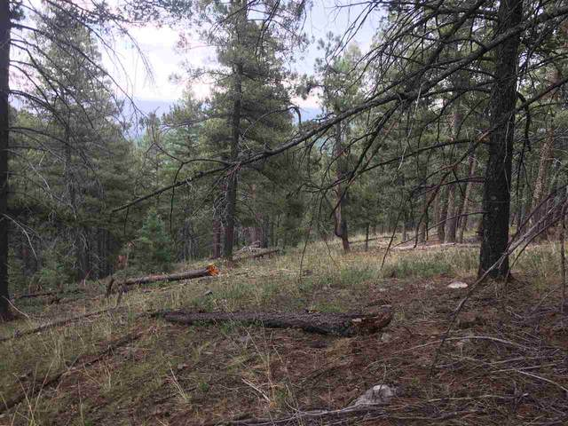 310 Dark Canyon Rd, Cloudcroft, NM 88317 (MLS #163132) :: Assist-2-Sell Buyers and Sellers Preferred Realty