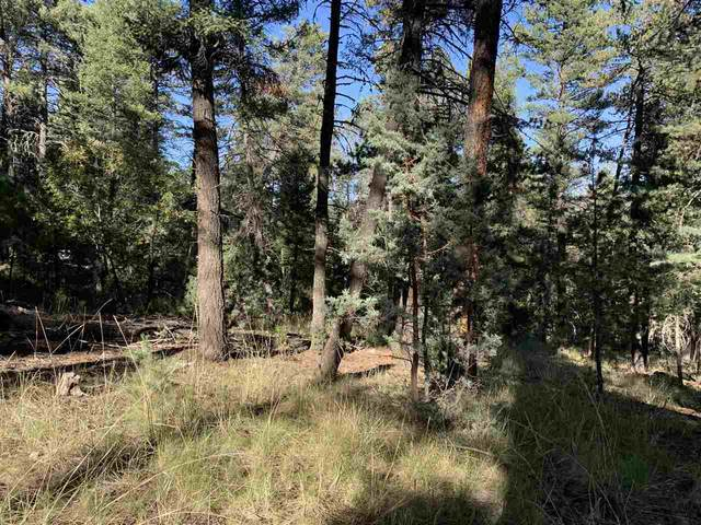 lot 20 Silver Fox Trl #2, Mayhill, NM 88339 (MLS #163504) :: Assist-2-Sell Buyers and Sellers Preferred Realty