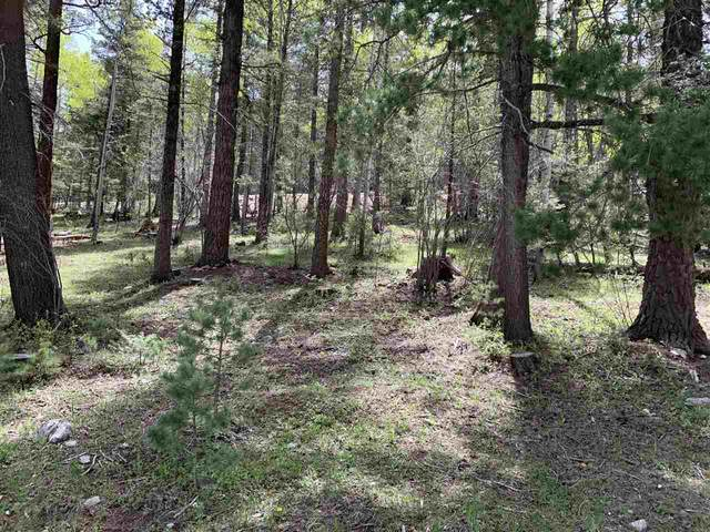702 Columbine Blvd, Cloudcroft, NM 88317 (MLS #163829) :: Assist-2-Sell Buyers and Sellers Preferred Realty
