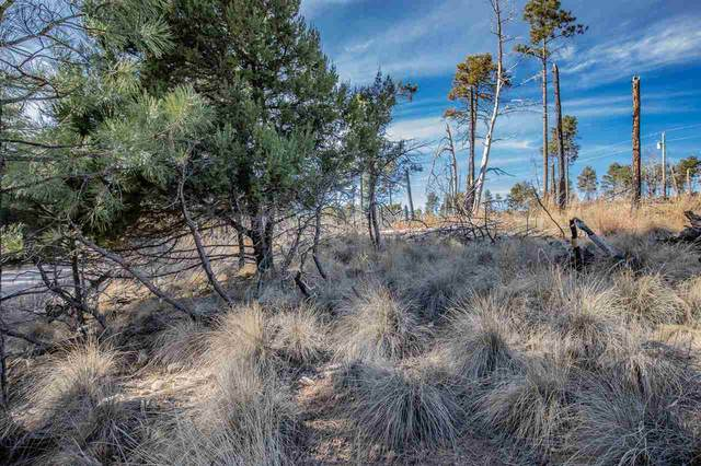 103 Oakmont Dr, Timberon, NM 88350 (MLS #163877) :: Assist-2-Sell Buyers and Sellers Preferred Realty