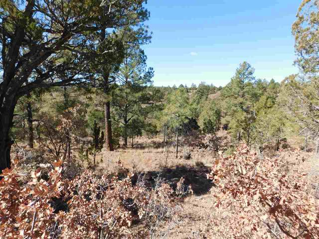 Huxley Dr, Timberon, NM 88350 (MLS #164066) :: Assist-2-Sell Buyers and Sellers Preferred Realty