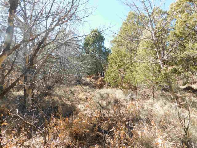 Pawnee Dr, Timberon, NM 88350 (MLS #164067) :: Assist-2-Sell Buyers and Sellers Preferred Realty
