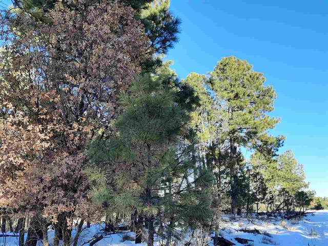 Lot 9 Address Not Published, Timberon, NM 88350 (MLS #164097) :: Assist-2-Sell Buyers and Sellers Preferred Realty