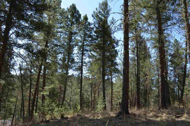 Honey Bear #2, Mayhill, NM 88339 (MLS #164439) :: Assist-2-Sell Buyers and Sellers Preferred Realty