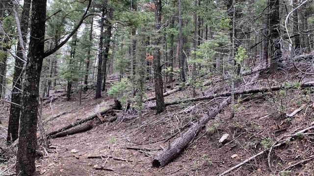 000 Mockingbird Ln, Cloudcroft, NM 88317 (MLS #164951) :: Assist-2-Sell Buyers and Sellers Preferred Realty
