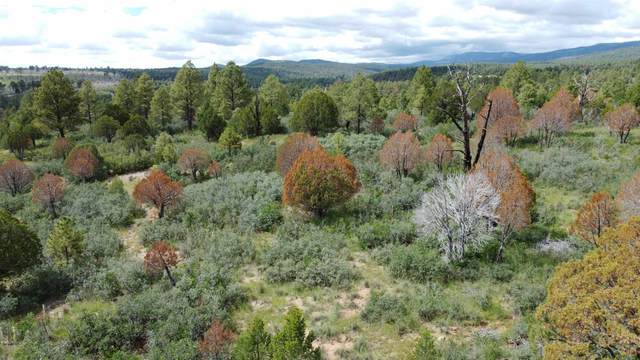Canyon Rd, Timberon, NM 88350 (MLS #165395) :: Assist-2-Sell Buyers and Sellers Preferred Realty