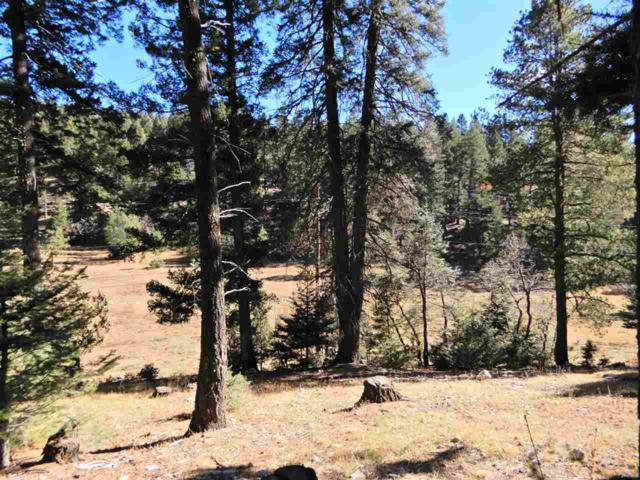 161 Sunspot Hwy, Cloudcroft, NM 88317 (MLS #157709) :: Assist-2-Sell Buyers and Sellers Preferred Realty