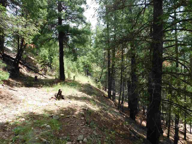 46 Bushwackers Gulley, Cloudcroft, NM 88317 (MLS #161241) :: Assist-2-Sell Buyers and Sellers Preferred Realty