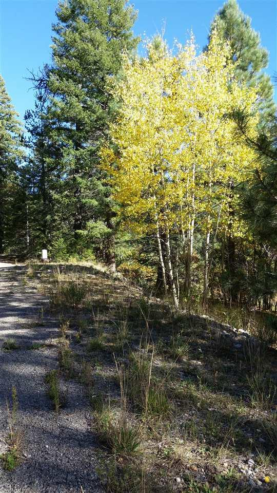 6, 7, 8, 9, 10 Mockingbird Ln, Cloudcroft, NM 88317 (MLS #157583) :: Assist-2-Sell Buyers and Sellers Preferred Realty