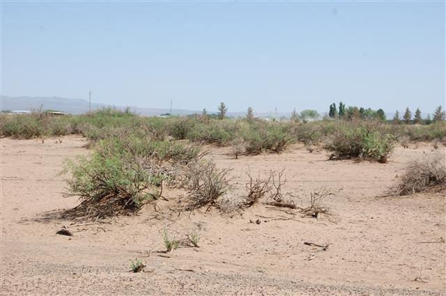 Lot 6 Cactus Wren, Alamogordo, NM 88310 (MLS #160824) :: Assist-2-Sell Buyers and Sellers Preferred Realty