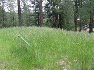 11 Camino Del Luna, Cloudcroft, NM 88317 (MLS #161265) :: Assist-2-Sell Buyers and Sellers Preferred Realty