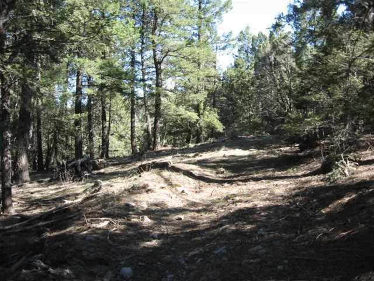 43 Acres Young Canyon Rd - Photo 1