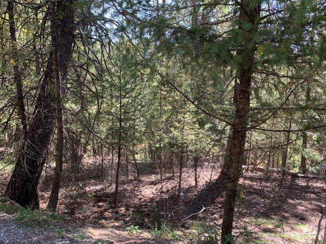 Slough Dr #3, Cloudcroft, NM 88317 (MLS #163586) :: Assist-2-Sell Buyers and Sellers Preferred Realty
