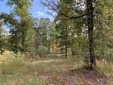13.25 AC County Road 435 - Photo 3