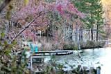 TBD Timber Lane - Photo 1