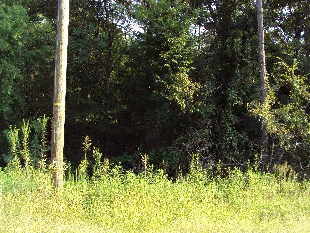 xxx Spring Creek Rd, BATESVILLE, MS 38606 (MLS #141273) :: John Welty Realty