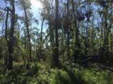 5 acres Whispering Pine Cr Circle - Photo 6
