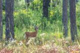 6606 Button Buck Trail - Photo 21