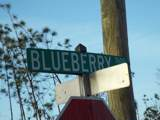 7612 Blueberry Road - Photo 1
