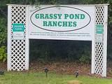 4799 Grassy Pond Road - Photo 6