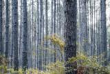 1380 Wrights Creek - Photo 68