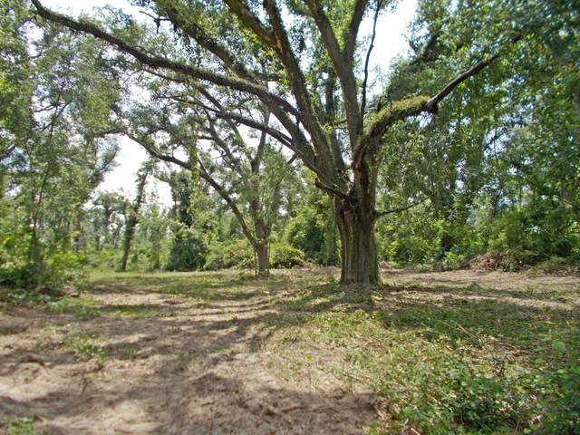000 Nubbin Ridge Road, Greenwood, FL 32443 (MLS #698097) :: Counts Real Estate Group