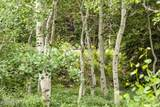 49 Silver Strike Trail - Photo 9