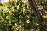 1625 Red Hawk Trail - Photo 16