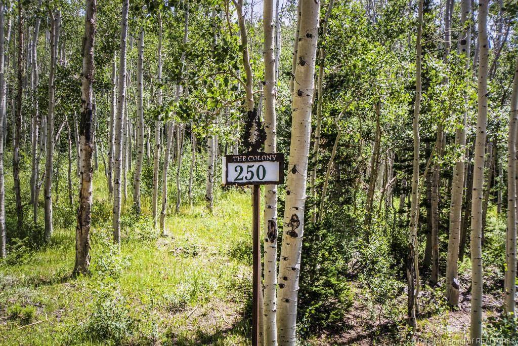 250 White Pine Canyon Road - Photo 1