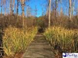 38 Saw Pine Lane - Photo 24