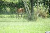 2800 Hunter's Ridge Drive - Photo 7