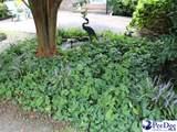 2639 Pineland Circle - Photo 25