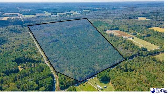 3161 S Hill Rd., Timmonsville, SC 29161 (MLS #20213852) :: Crosson and Co