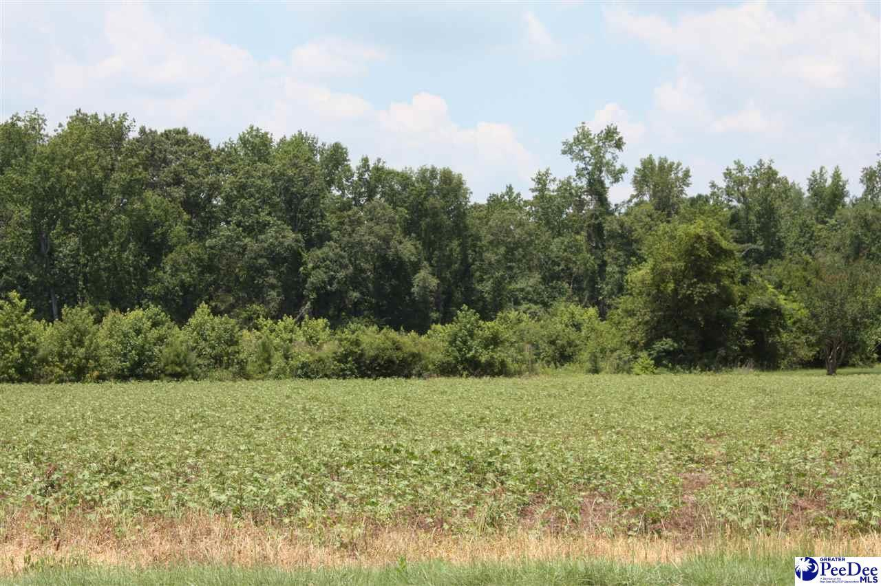 Muddy Creek Rd - Photo 1
