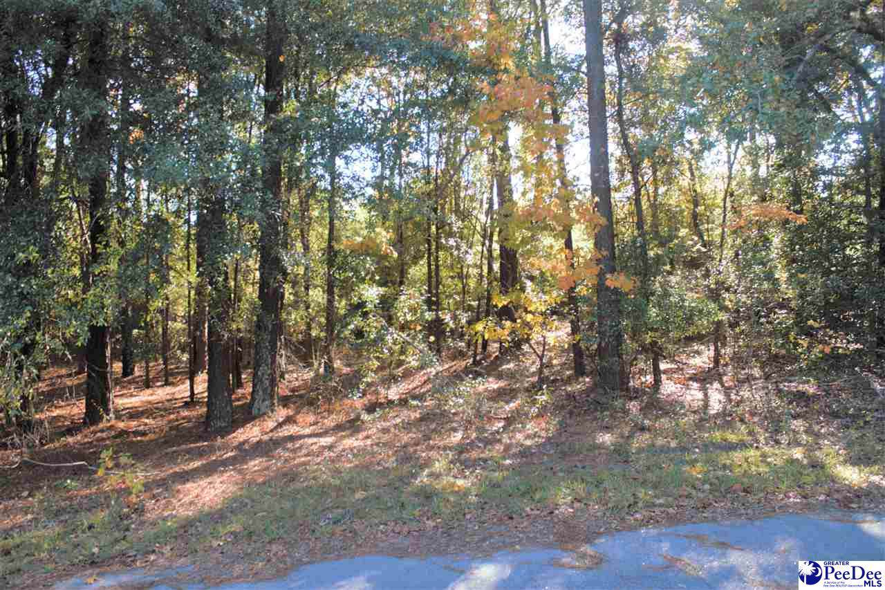 Lot Pineville Subdivision - Photo 1
