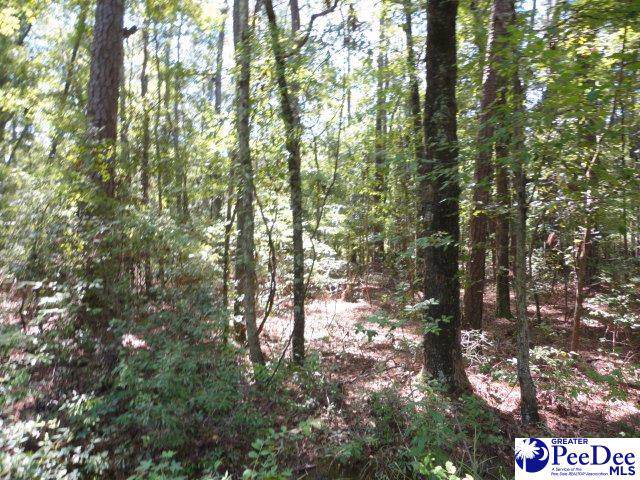 tbd Old Marion Hwy, Quinby, SC 29506 (MLS #20194335) :: Coldwell Banker McMillan and Associates