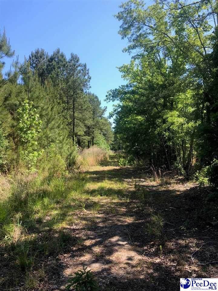 Country Lane - Photo 1