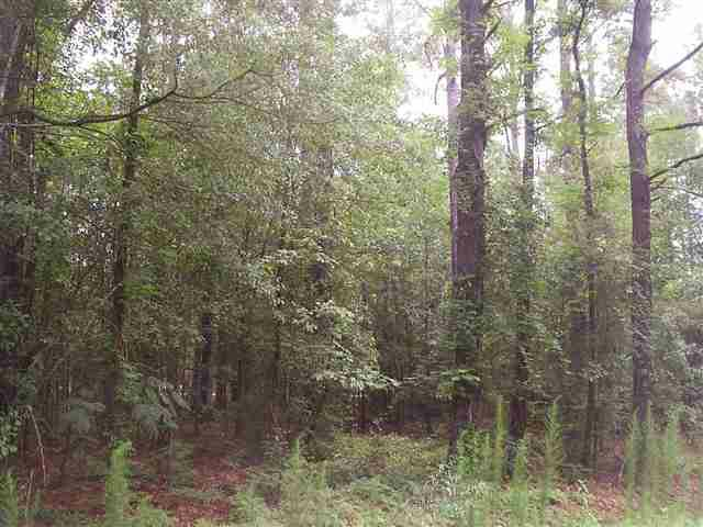 Lot 13 Driftwood Drive - Photo 1