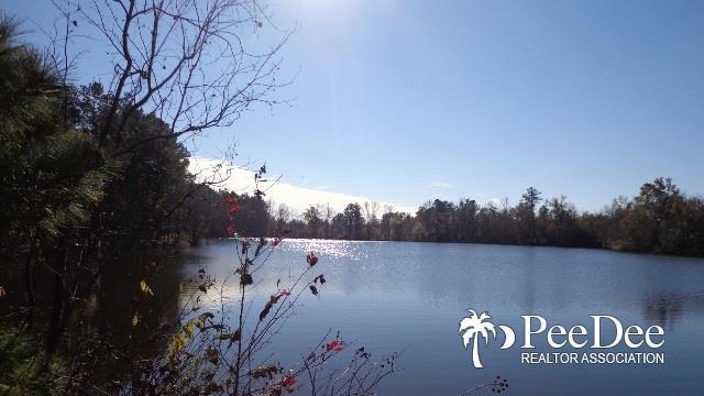 TBD Buck Swamp - Photo 1