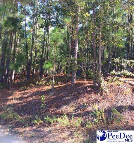 Lot Forest Breeze Drive, Hartsville, SC 29550 (MLS #136200) :: RE/MAX Professionals