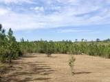 Lot 7-SW Gin Rd - Photo 6
