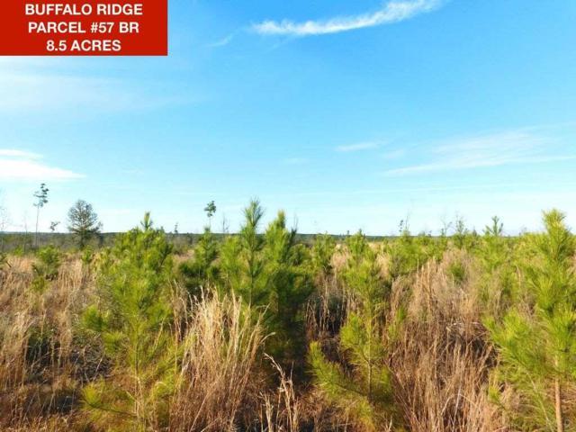 Lot 57 BR Buffalo Ridge Dr, Pace, FL 32571 (MLS #549575) :: Levin Rinke Realty